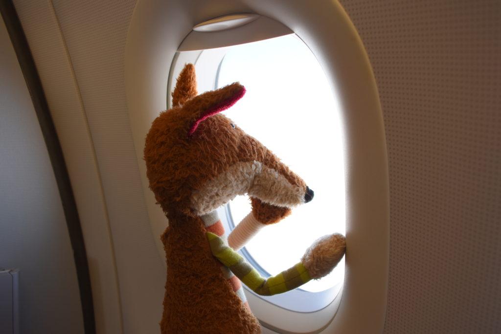 Sigi schaut aus dem Flugzeugfenster
