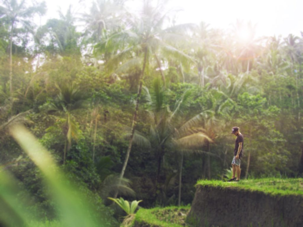 Reisterrassen bei Ubud, Bali