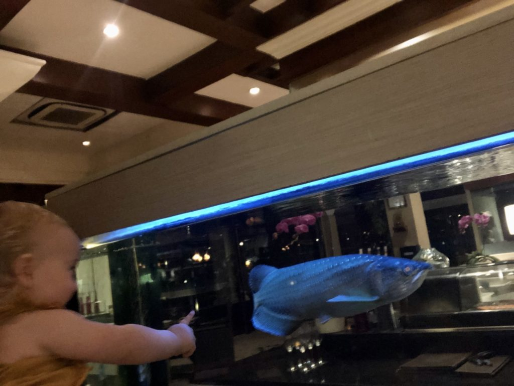 Abendessen: frische Fisch Auswahl direkt aus dem Aquarium ;-)