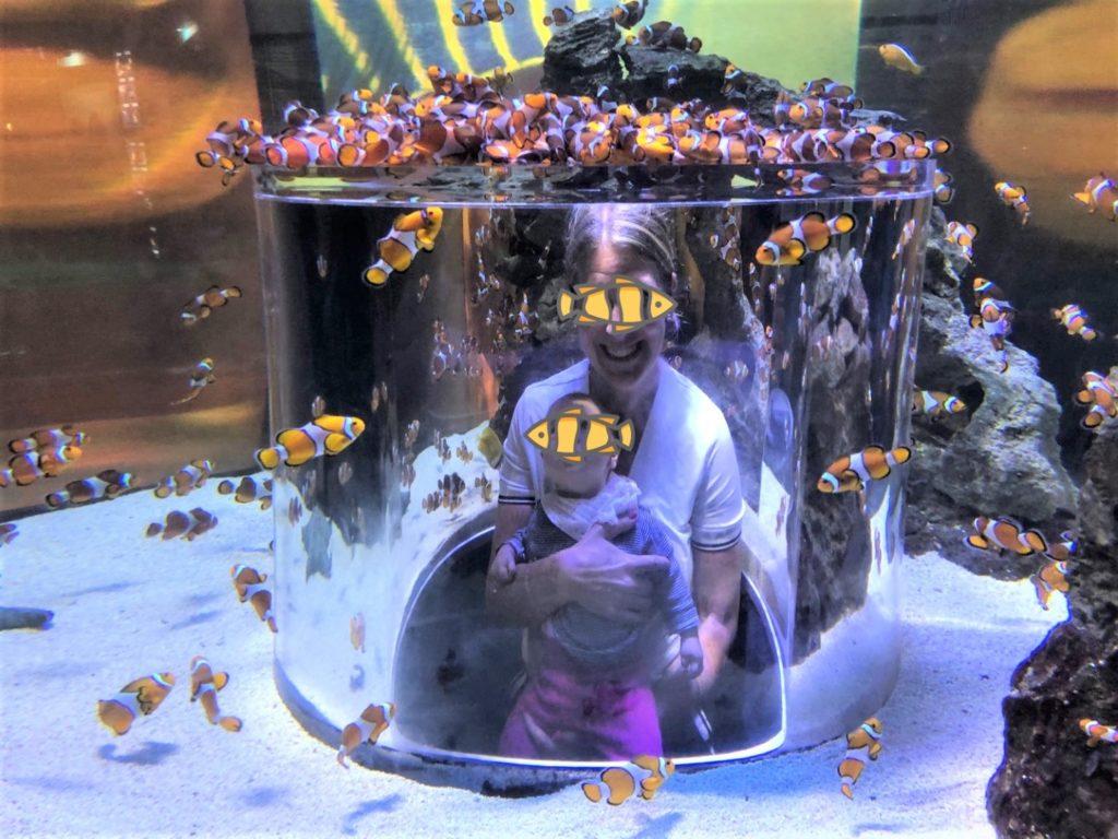 Two Ocean Quarium - Clown Fish